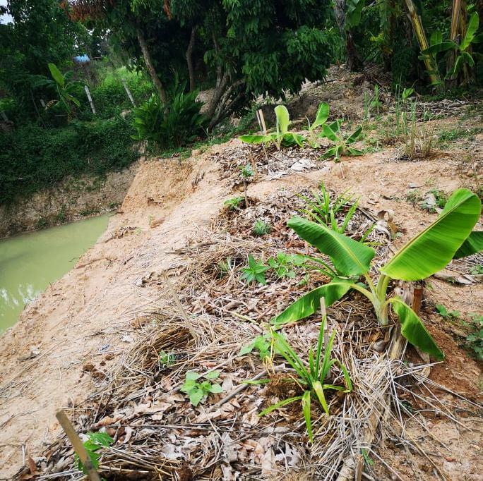 Premieres plantations près de l'étang