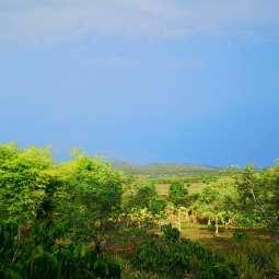 Au loin, rizières et montagnes